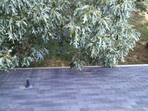 Smyrna's Best Gutter Cleaners Before and After Tree Pruning
